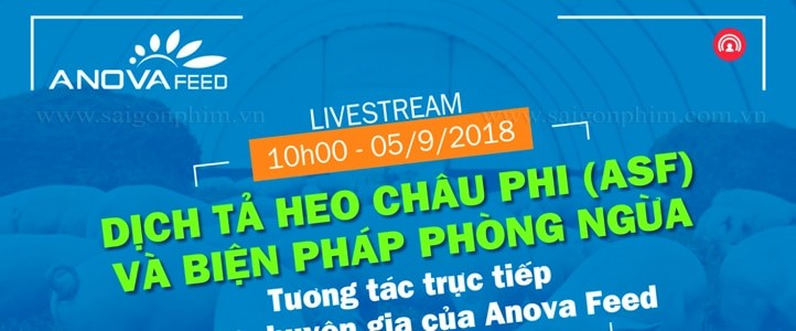 Live Stream: Dịch tả heo Châu Phi và biện pháp phòng ngừa